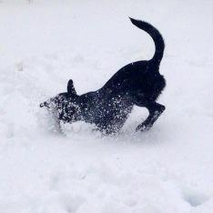Joanna loves the snow!