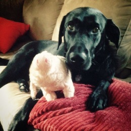 Joanna with her favorite pig. Usually they only last one day -- but this one is hanging on!