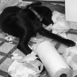 Joanna got hold of the paper towels :)