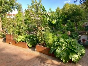 Gemyse garden